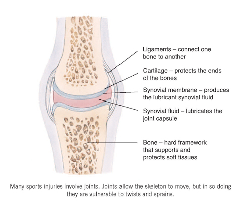 where tendons and ligaments meet bone